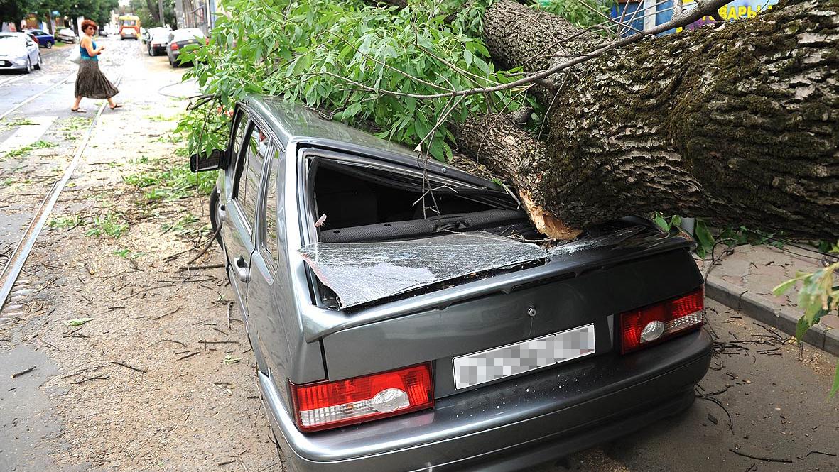 Как отсудить деньги за упавшее на машину дерево