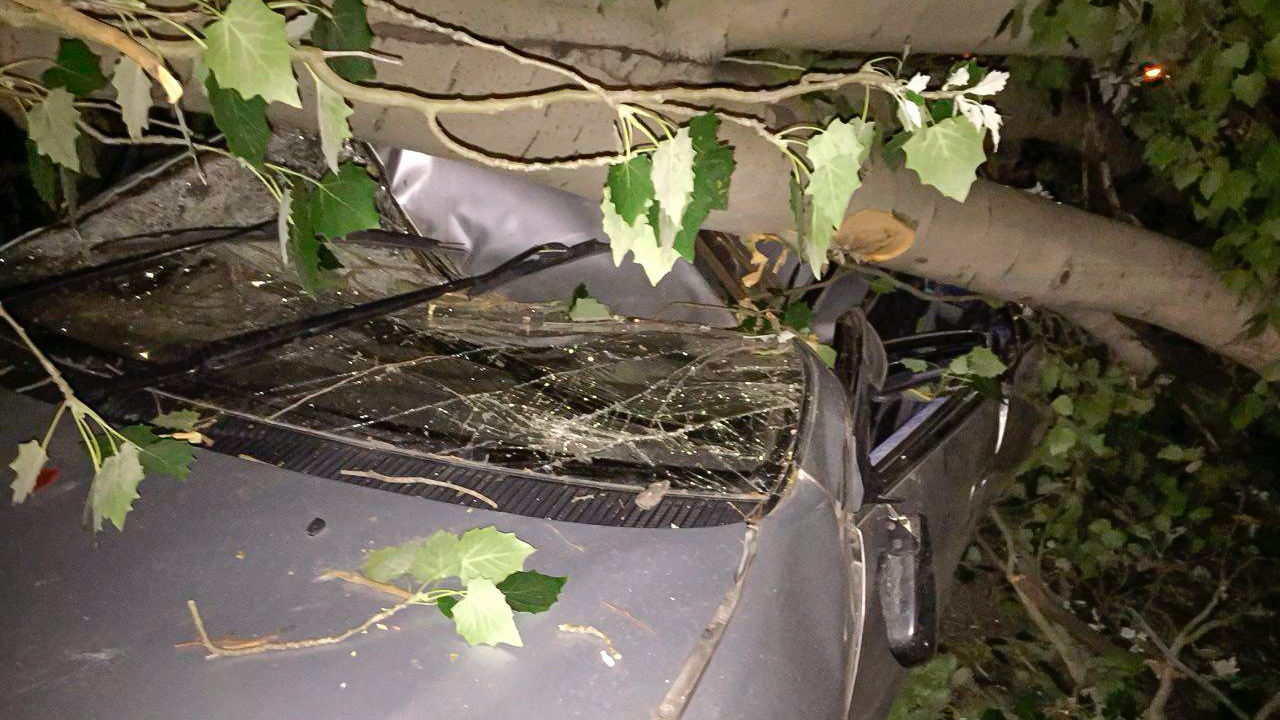 Тополь раздавил Toyota Ipsum в Алматы