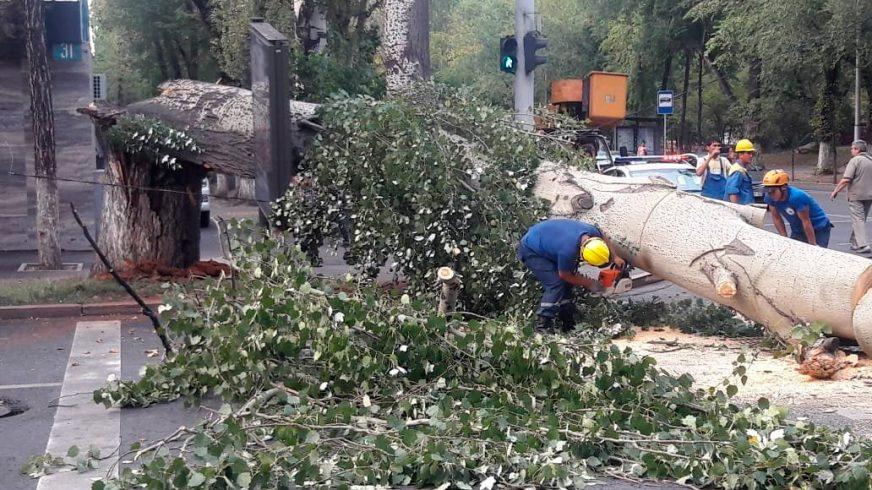 Тополь раздавил Kia Cerato в Алматы