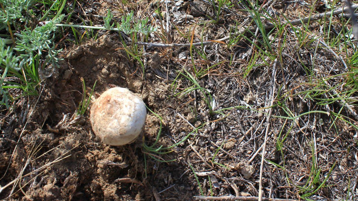 Малайсары — место, где растут грибы