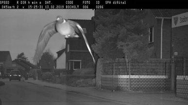 В Германии за превышение скорости оштрафовали голубя