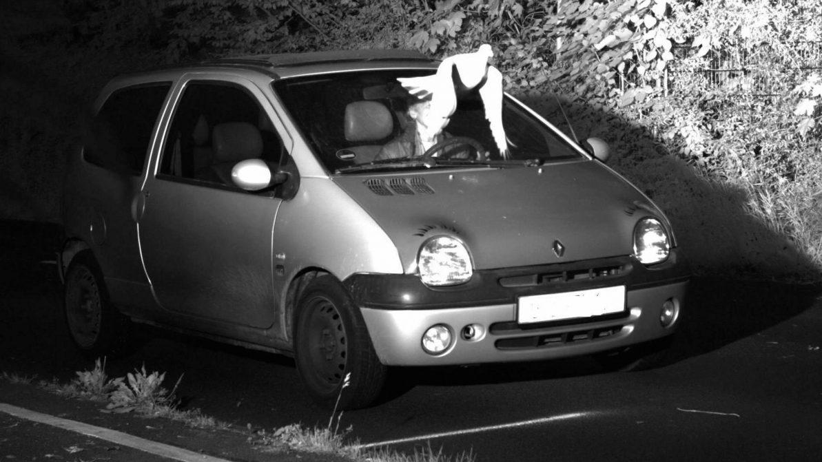 Голубь спас водителя от штрафа в Германии