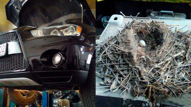 Что можно найти под двигателем автомобиля