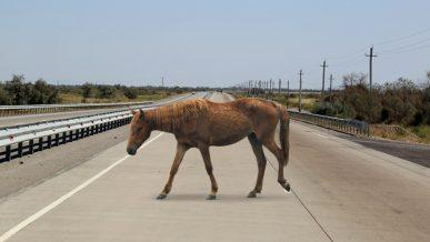 Лошадь на трассе Алматы – Хоргос стала причиной гибели пенсионера