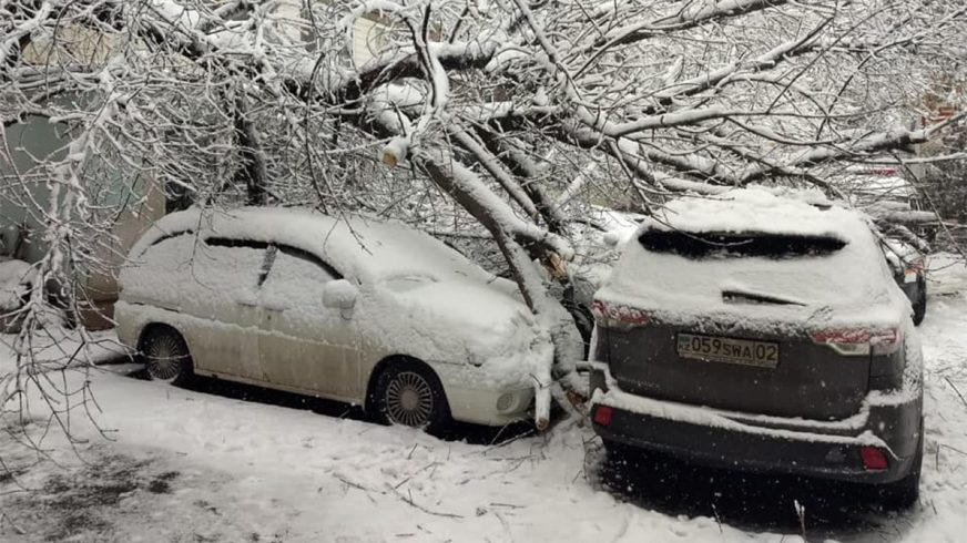 Несколько десятков машин в Алматы придавило деревьями и упавшими ветками в снегопад